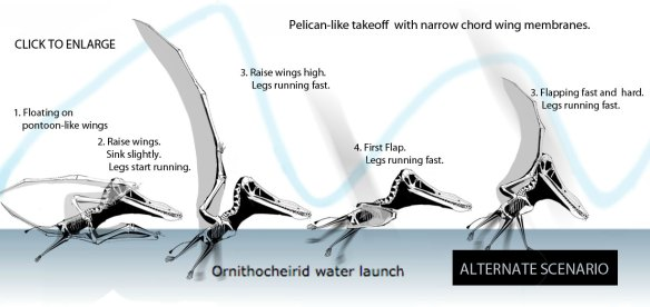 Pterosaur water launch