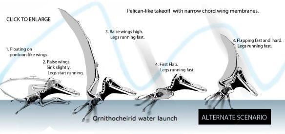 Pterosaur water launch