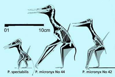 Protoazhdarchids