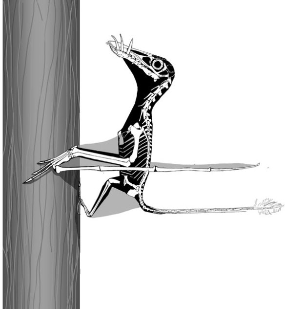Dorygnathus on a tree.