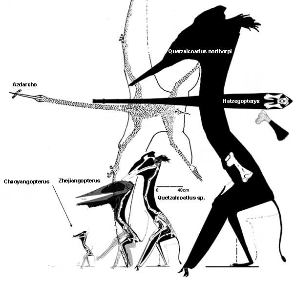 Most Azhdarchids Were Small | The Pterosaur Heresies