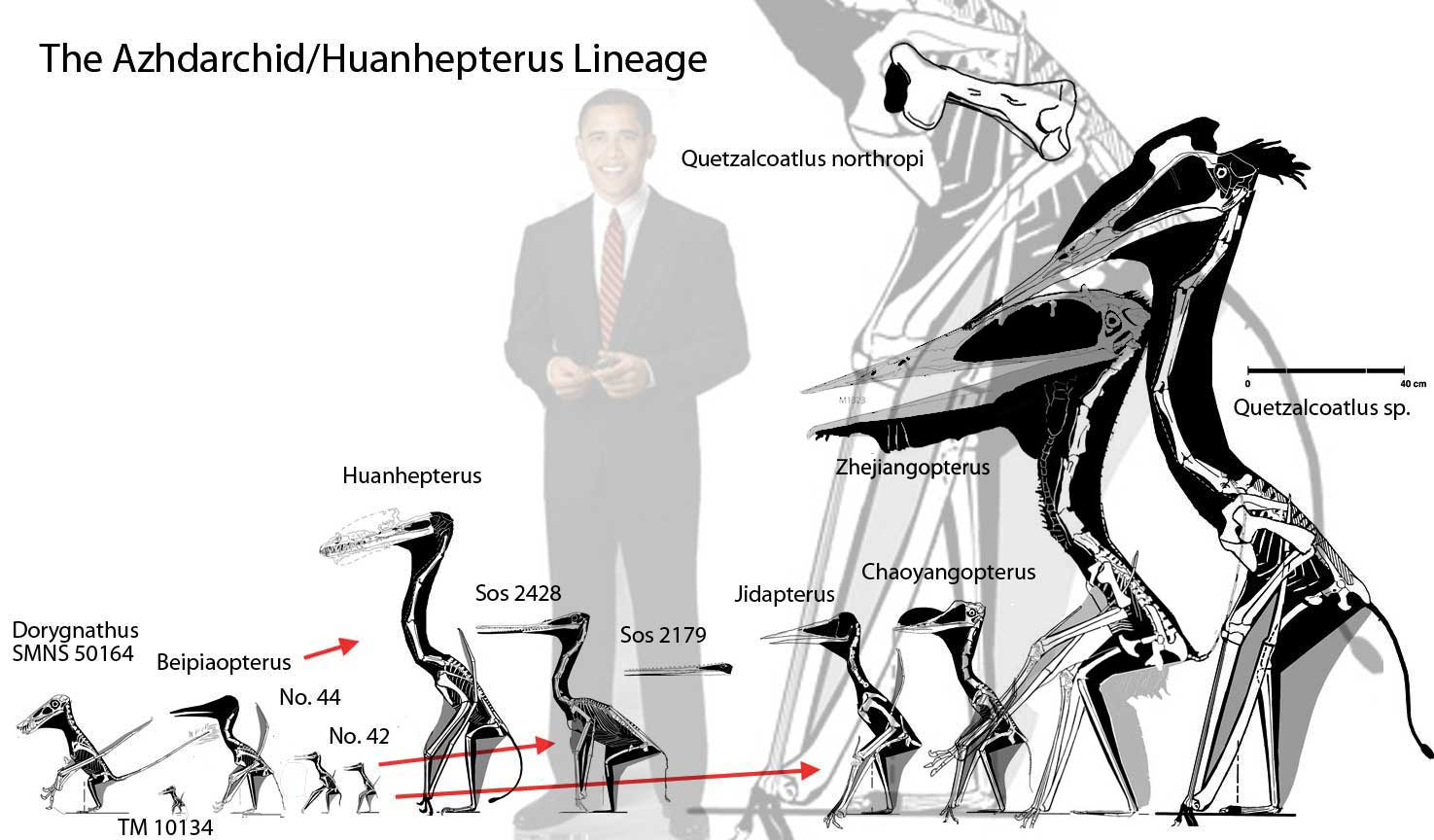 Most Azhdarchids Were Small The Pterosaur Heresies