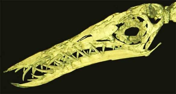 UV light image of a fully articulated Rhamphorhynchus