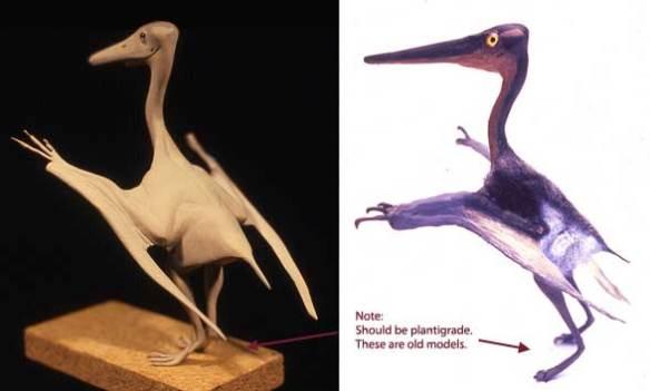 Pterodactylus by David Peters