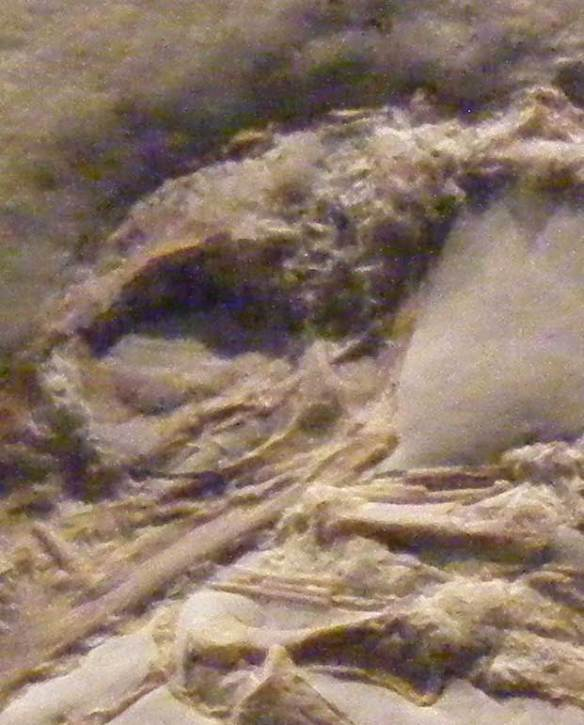 Rhamphorhynchus intermedius, a sister to Bellubrunnus.