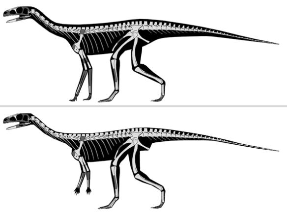 Asilisaurus.
