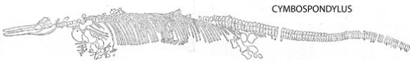 Figure 1. Cymbospondylus overall in situ.