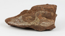 Figure 2. Fossil skull of new Nova Scotia discovery.