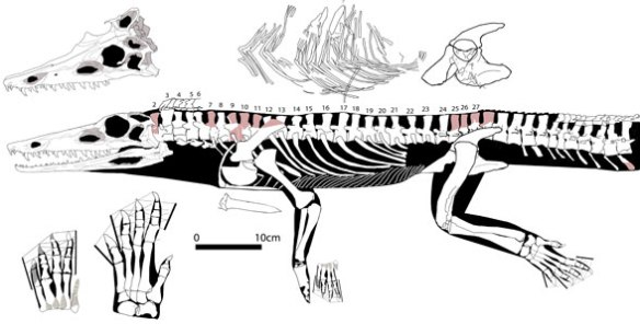 Diandongosuchus nests as a basal phytosaur when choristoderes and basal younginoids are included, far from Qianosuchus, which also does not nest with poposaurs, which are all bipedal (or formerly bipedal) herbivores, a far cry from Diandongosuchus.