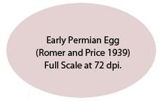 EarlyPermianReptileEgg
