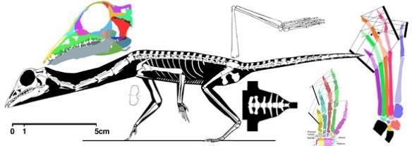 Langobardisaurus tonelloi