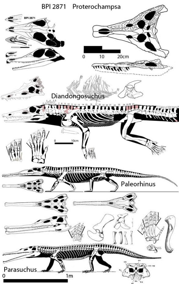The real sister taxa and close relatives of Diandongosuchus