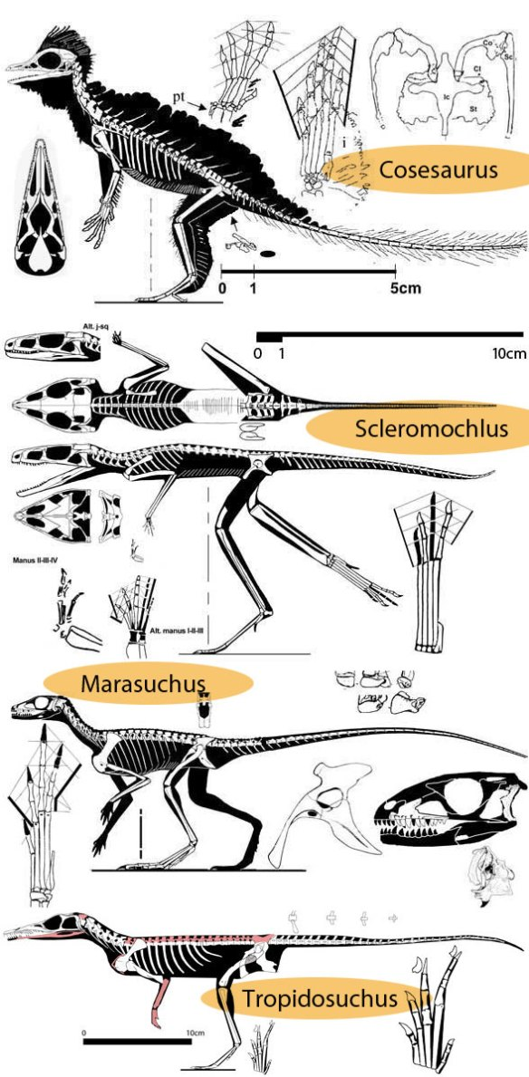 Bipeds of the Triassic