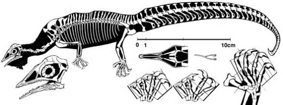 Megalancosaurus including the palate, the only palate ever figured for a drepanosaur.
