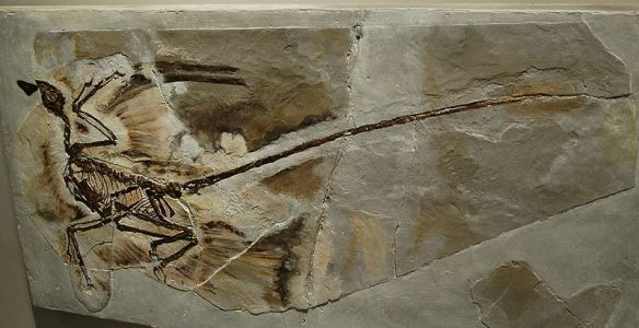 Microraptor with feather impressions.