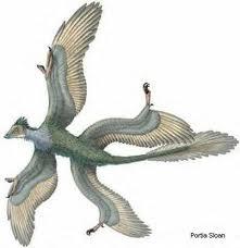 Early illustration of Microraptor sprawling like a flying lizard,