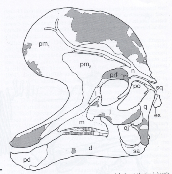 From Evans and Reisz (2007)the skull of Lambeosaurus