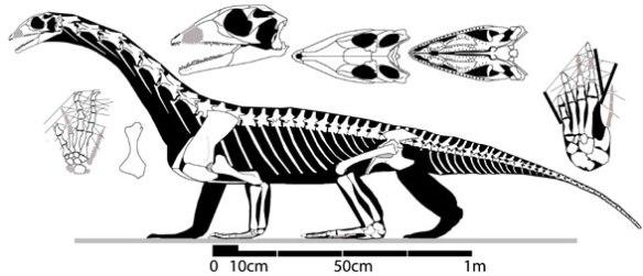 Pamelaria, an long-necked protorosaur related to Protorosaurus.