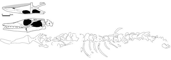 Tethysaurus