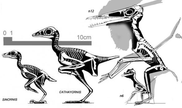 Small prehistoric birds and pterosaurs.