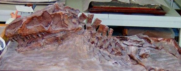 Figure 2. Skull and neck of Vjushkovia/ Youngosuchus.