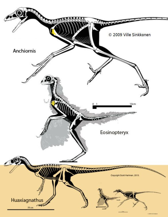 Eosinopteryx and kin to two scales.