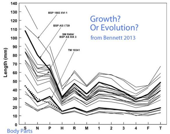 Chart from Bennett 2013 of skull and post-cranial bone lengths