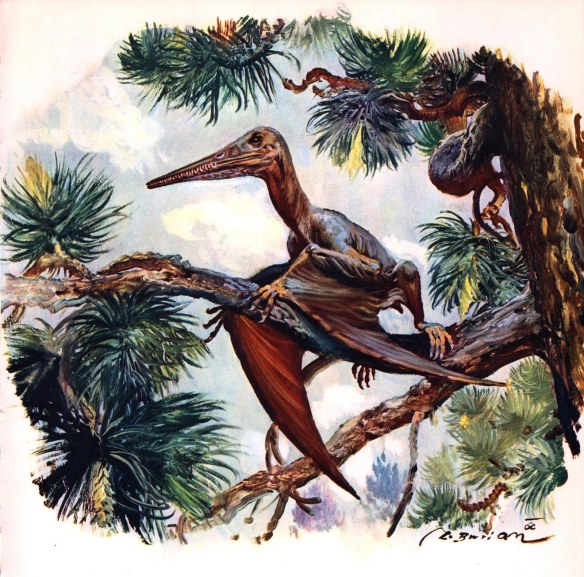 Figure 4. Artist Z. Burian also struggled to realistically portray the folded wing membrane in pterosaurs forgetting the fossils and the fact that both birds and bats have no trouble folding their wings without wrinkling them.