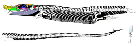 Concavispina biseridens, a new thalattosaur with twin blunt teeth and a wide, platypus-like bill.