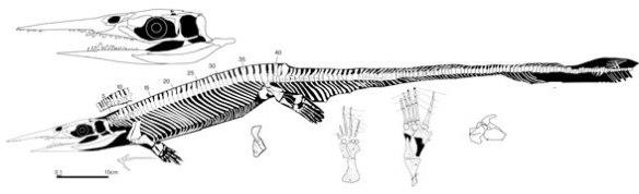 Xinpusaurus kohi, the swordbill species.