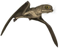 Anurognathus by Mark Witton following the reconstruction by Chris Bennett (2007) that is different in all respects from all other pterosaurs.