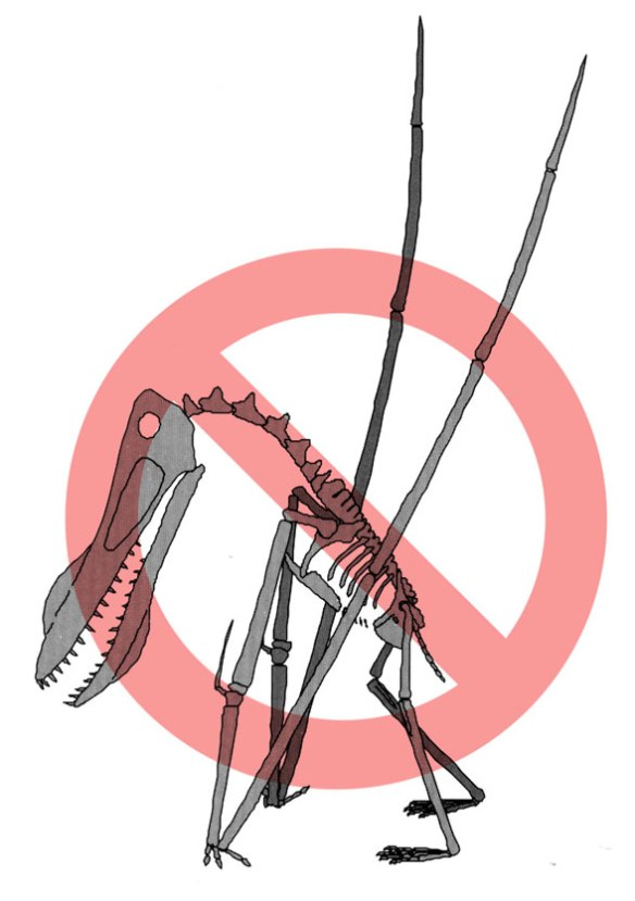 """According to Unwin 2006, this is the posture that pterodactyloids are now thought to have adopted while walking. The position of the elbows contradicts his text, which states, """"[the humerus] lay nearly parallel to the body."""""""