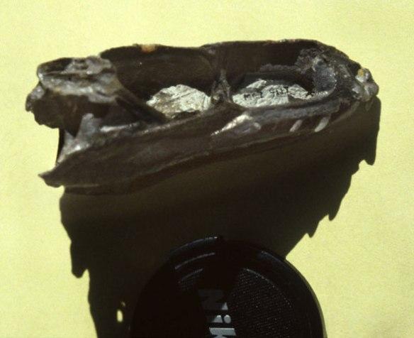 A rather complete Gracilisuchus skull, courtesy of M. Parrish.