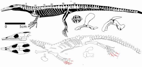 Figure 1. Lazarussuchus, the old specimen (above) and the new specimen (below) from Matsumoto et al. 2013.