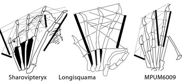 longisquama-foot588