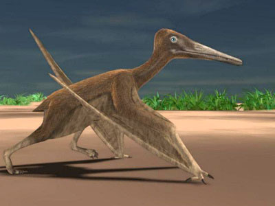 Pterodactylus walking. Note the foot will never plant itself in front of the hand here. And why are both hands on the ground at the same time as the back foot? Hmm.