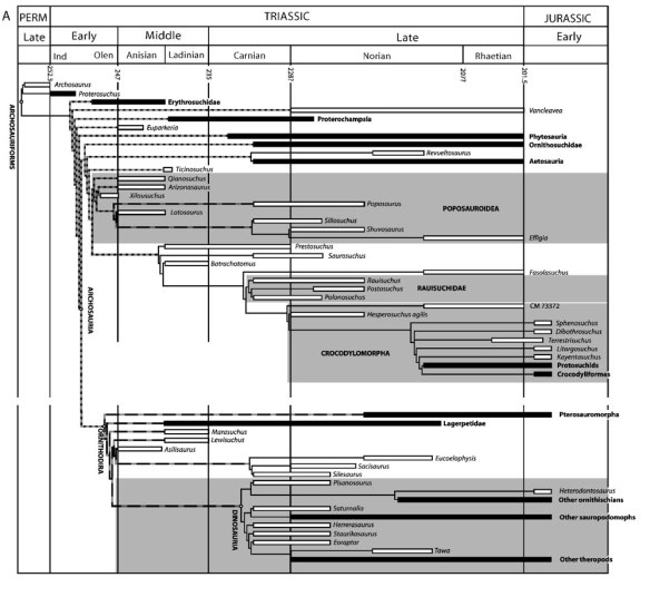 The family tree of Archosaurs and their ancestors by Sterling Nesbitt.