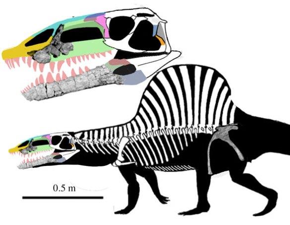 Arizonasaurus with a new Qianosuchus-like skull.