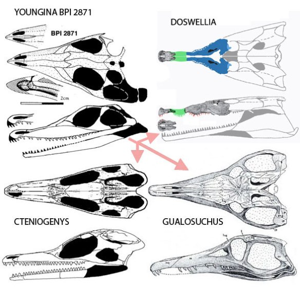 Figure 2. Basal Pararchosauriformes includingin Youngina, Doswellia, Cteniogenys and Gualosuchus.