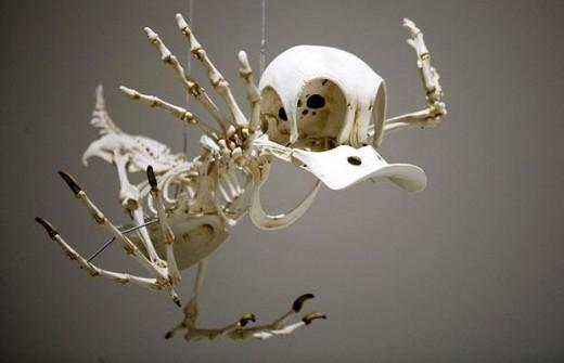 Donald Duck skeleton