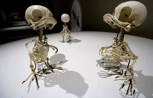 Huey, Dewey and Louie skeletons