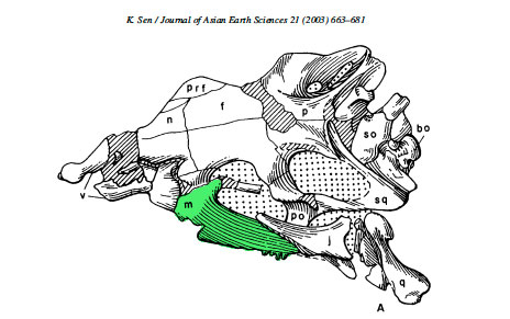 The skull of Pamelaria from Sen 20003, with the maxilla highlighted in green. The maxilla appears similar to that in Jaxtasuchus in having an antorbital fenestra.