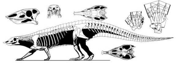 Stagonlepis, an aetosaur.