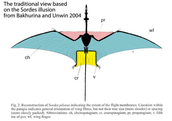 Figure 1. Basal pterosaur wing membranes based on the Sordes illusion, from Bakhurina and Unwin (2004).