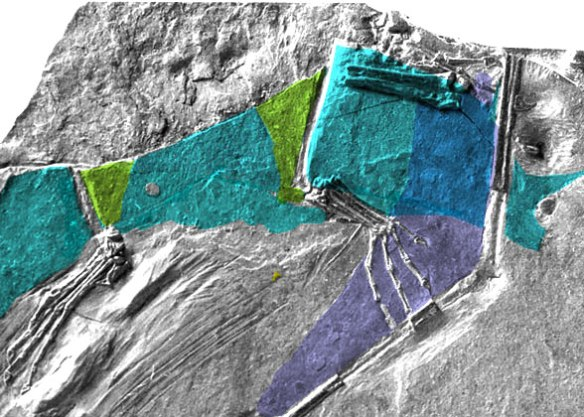 MCSNB 8950 colorized wings and uropatagia on the insitu fossil.