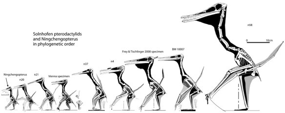Click to enlarge. Pterodactylids in phylogenetic order.