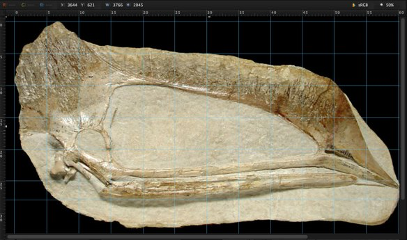New Tapejarid-Tupuxuarid skull.