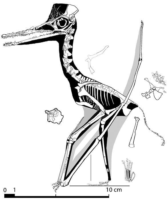 Figure 2. BSp 1968 XV 132
