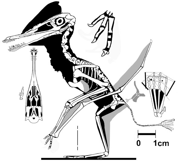 AMNH 5147
