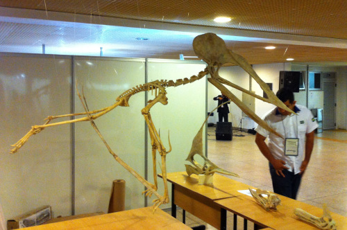 Tupuxuara by Helder da Rocha in a controversial forelimb launch pose with medial hands facing posteriorly.